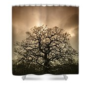 Lone Tree Shower Curtain by Amanda Elwell