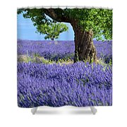 Lone Tree In Lavender Shower Curtain