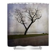 Lone Tree In Winter Shower Curtain