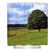 Lone Tree On Grassy Knoll Shower Curtain
