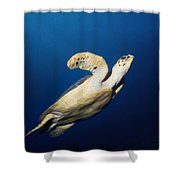 Lone Turtle Shower Curtain