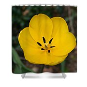 Lone Yellow Tulip Shower Curtain