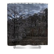 Lonely Bald Cypress Shower Curtain