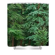 Lonely Graveyard Under Pine Trees Shower Curtain