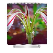 Lonely Lilly Shower Curtain