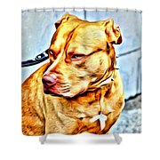 Lonely Pit Bull Shower Curtain