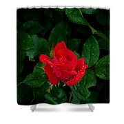 Lonely Rose Shower Curtain
