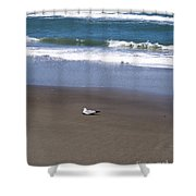 Lonely Sea Gull Shower Curtain