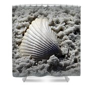 Lonely Shell Shower Curtain