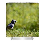 Lonesome And Blue Shower Curtain
