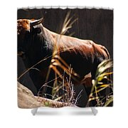 Lonesome Bull Shower Curtain