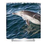 Long-beaked Common Dolphin Porpoising Shower Curtain