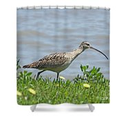 Long Billed Curlew At Palacios Bay Tx Shower Curtain