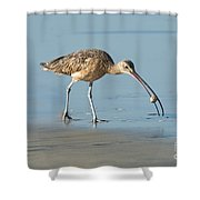 Long-billed Curlew Catching Crab Shower Curtain