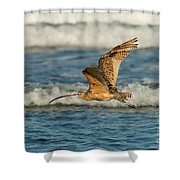 Long-billed Curlew Flying Over The Surf Shower Curtain