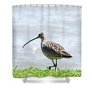 Long Billed Curlew  Shower Curtain