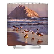 Long Billed Curlew - Morro Rock Shower Curtain