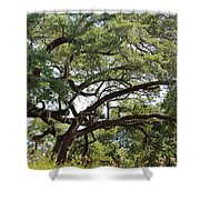 Long Branches Shower Curtain