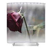 Red Rose Still Life Shower Curtain