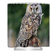 Long-eared Owl 4 Shower Curtain