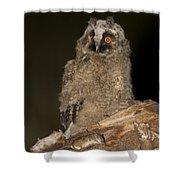 Long-eared Owl Asio Otus Shower Curtain