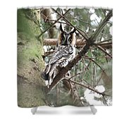 Long Eared Owl At Attention Shower Curtain