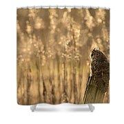 Long-eared Owl Shower Curtain