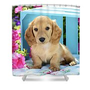 Long Eared Puppy In Front Of Blue Box Shower Curtain