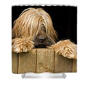 Long-haired Dog Shower Curtain