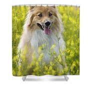 Long Haired Mixed Breed Shower Curtain