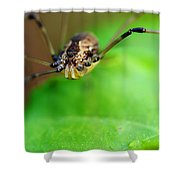 Long Legger Shower Curtain