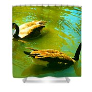 Long Neck Ducks Shower Curtain