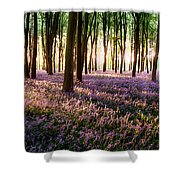 Long Shadows In Bluebell Woods Shower Curtain