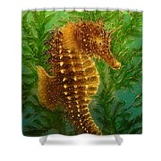 Long Snout Seahorse Shower Curtain