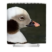Long-tailed Duck Shower Curtain