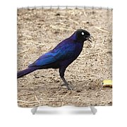 Long Tailed Glossy Starling  Shower Curtain