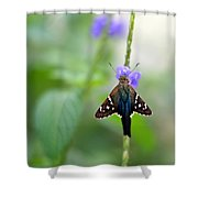 Long Tailed Skipper Shower Curtain