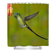 Long-tailed Sylph Shower Curtain