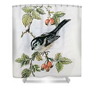 Long Tailed Tit And Rosehips Shower Curtain