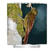 Long-tailed Woodcreeper Shower Curtain