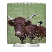 Longhorn And Friend Shower Curtain