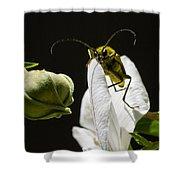 Longhorn Beetle Feeding Shower Curtain