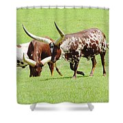 Longhorn Cattle Shower Curtain