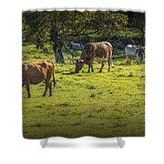 Longhorn Steer Herd In A Pasture Shower Curtain