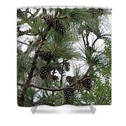 Longleaf Pine Cones Shower Curtain