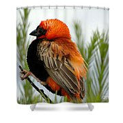 Lonley Bird Shower Curtain