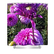 Look At Me Dahlia Flower Shower Curtain