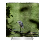 Look Through The Trees Shower Curtain