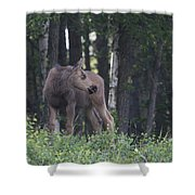 Looking For Mom Shower Curtain