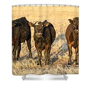 Looking For Trouble 5-3-2014 Shower Curtain